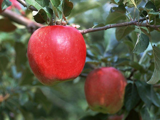 色とりどりの果物 HOME | 色とりどりの果物 | メロン | さくらんぼ | ぶどう...